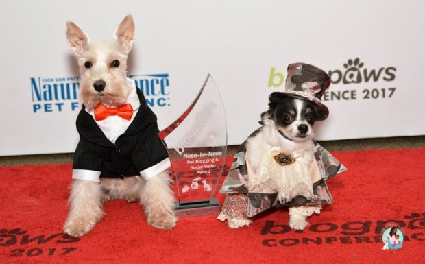 BlogPaws Conference Red Carpet IPartyWithBruceWayne