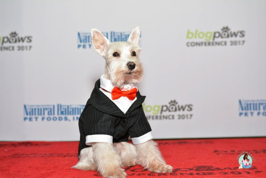 BlogPaws Conference Red Carpet Simba