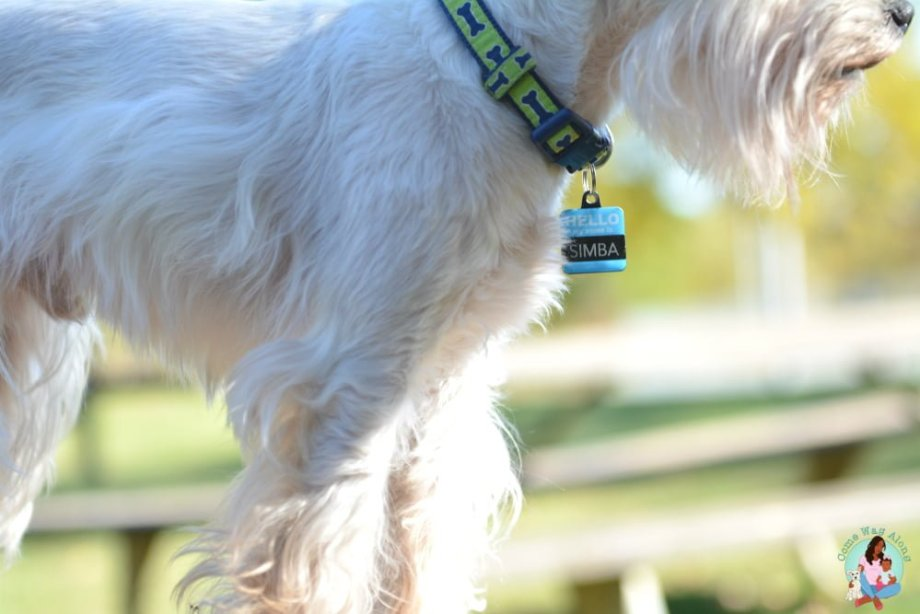 Pet Preparedness Natural Disasters - Up to Date Tags