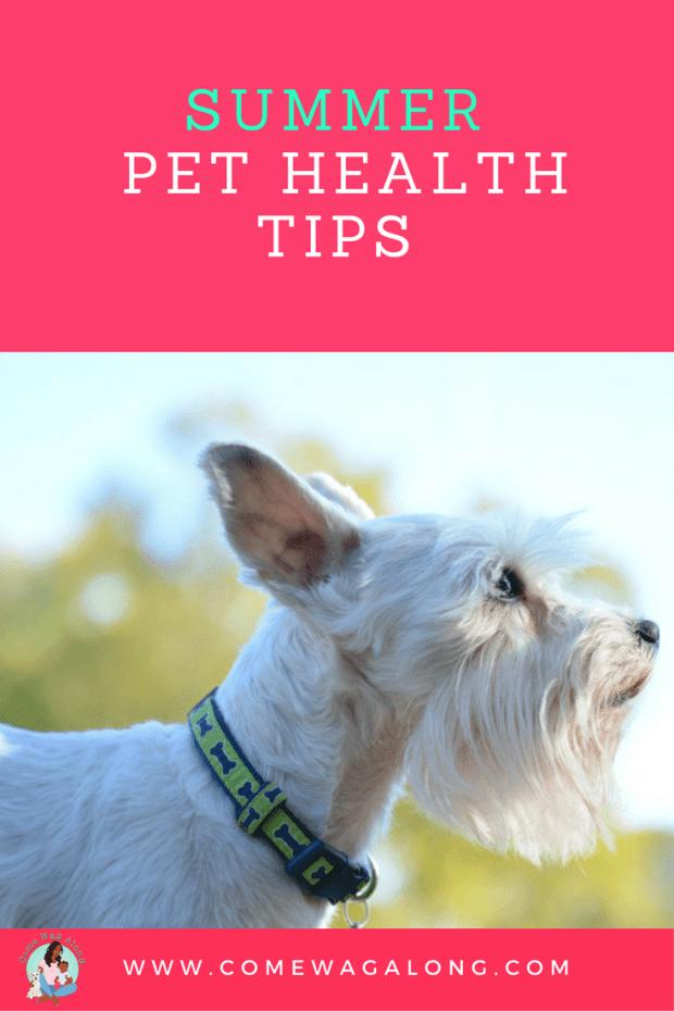 Summer Pet Health Tips