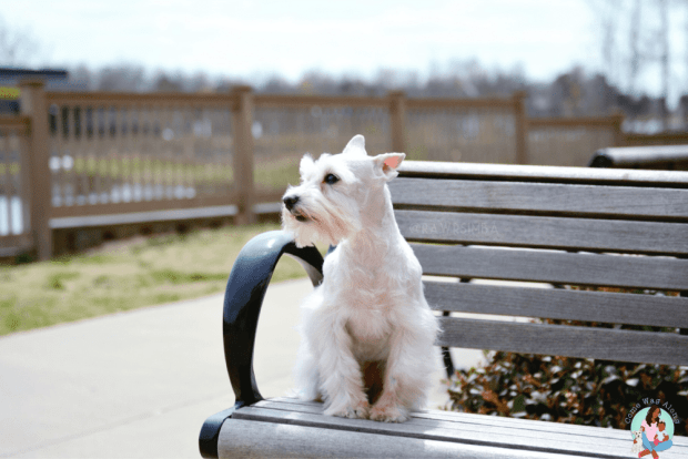 Summer Tips for Dogs