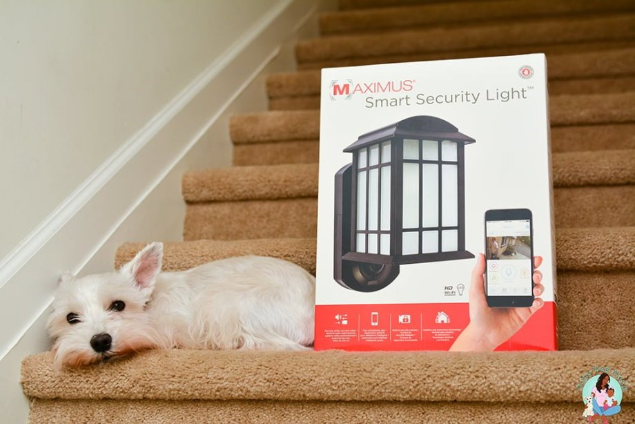 Keep an Eye on Your Pet and Your Home with the Maximus Smart Security Light