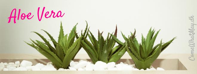 Lindring af skoldkopper med aloe vera