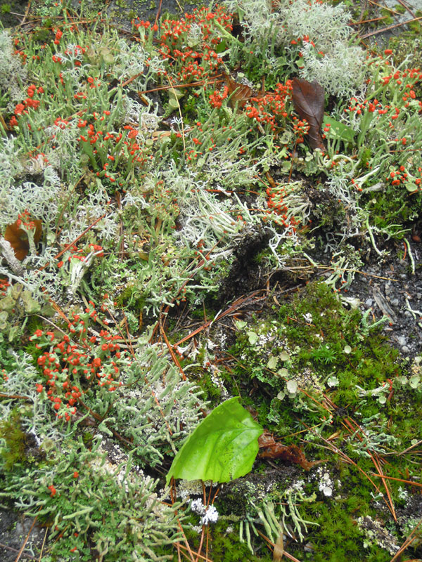 A garden of lichen with mosses and leaves. Love the rich texture- maybe for a honeycomb and lace combination.