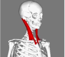 二重アゴと首のたるみの要因とスッキリさせる方法