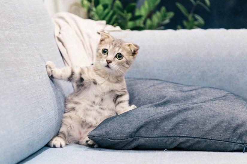 surprised looking kitten on a sofa