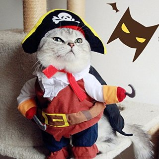halloween-costumes-pets-pirate.jpg