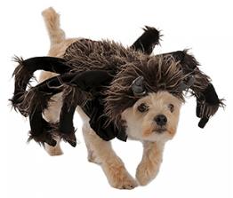 Dog Halloween costumes- tarantula