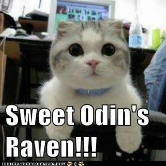 Odins raven cat meme