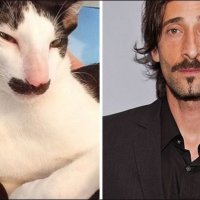 Cats Who Look Like People