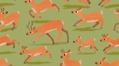 deer by lucy knisley