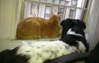 The real life Piggy and his pal Simon the cat