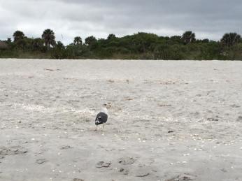 sanibel-bowmans-beach-2
