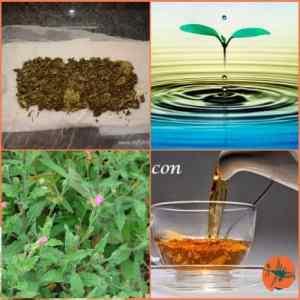 Recetas con chupasangre hierba (1)