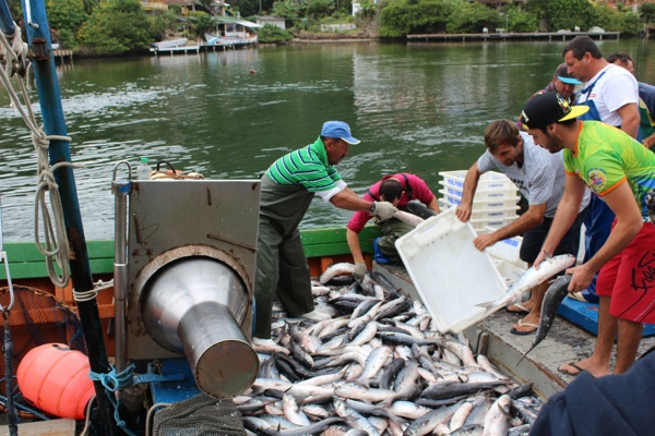 Barco Pesca Brasil descarregando as tainhas na Barra da Lagoa