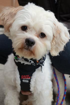 Jolly is Looking for His Forever Home