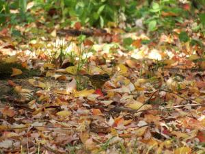 枯れ葉舞い散る