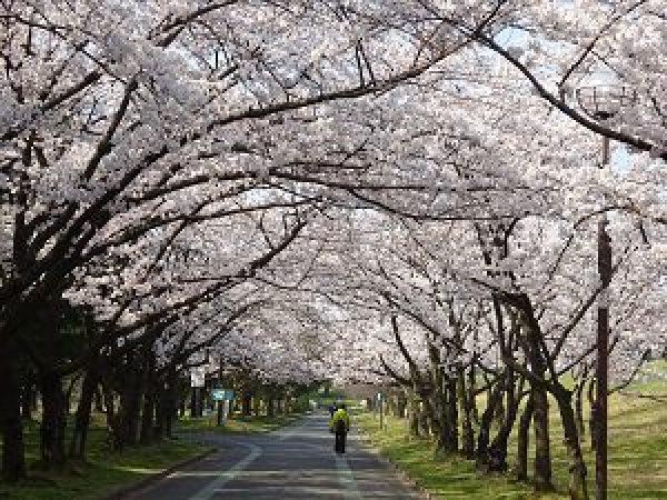 庄内緑地グリーンプラザ桜