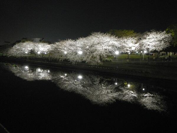 荒子川公園夜桜