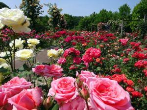 花フェスタ記念公園