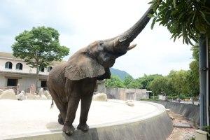 .広島市安佐動物公園
