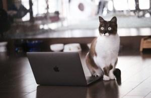 cat126IMGL6389_TP_V4