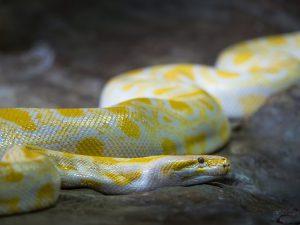 蛇 夢占い