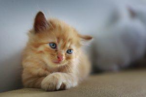 cat-3266673_1920