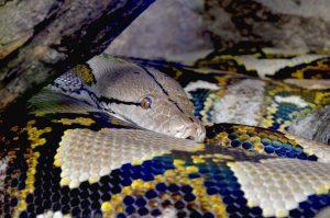 python-1389685_1920