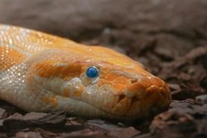 snake-5718479_1920