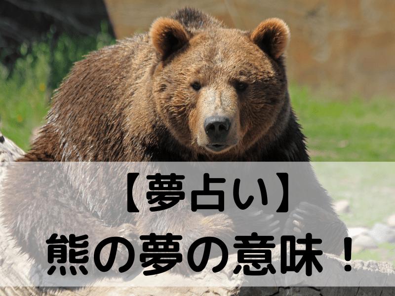 【夢占い】 熊の夢の意味!