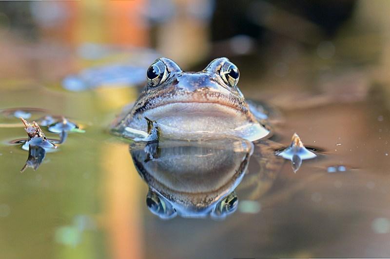 tarot, mediumship, transformation, frog, lgbt