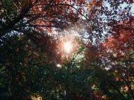 it was a gorgeous fall day when I visited, with the trees just starting to molt