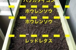 「二十日大根」「ほうれん草」「レッドレタス」「パクチー」