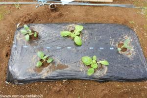 ミニキャベツ、ミニハクサイ、茎ブロッコリ