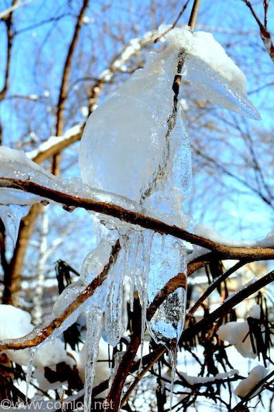 朝日を浴びた氷柱