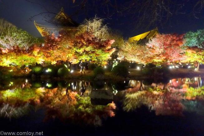 東寺ライトアップ 川面に映る紅葉