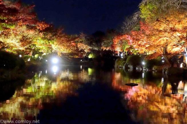 東寺ライトアップ 川面に映る紅葉  瓢箪池に映る紅葉