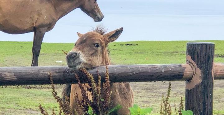 都井岬 みさき馬