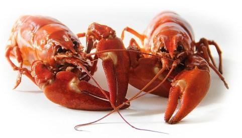 crayfish-423251_1280.jpg