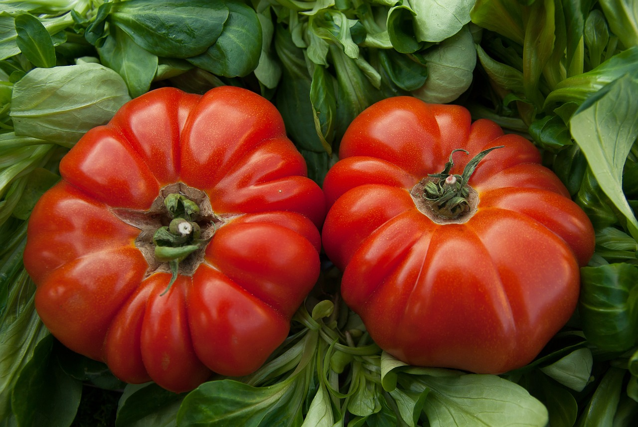 tomatoes-1331730_1280