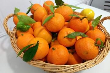 Frutas y verduras de temporada en Diciembre 8