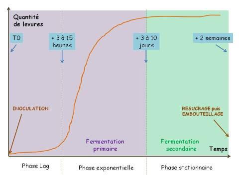 graphique multiplication des levures