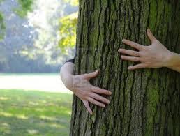 embrasser_arbre