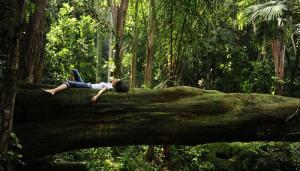 meditation nature branche