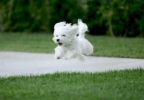 Bonus 1 : Les principes de l'éducation canine positive et amicale