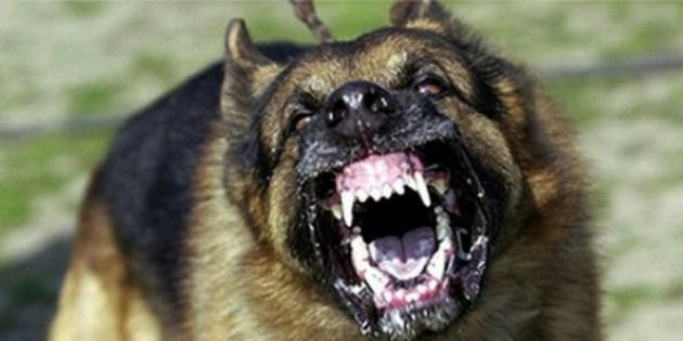 Que faire avec un chien agressif ?