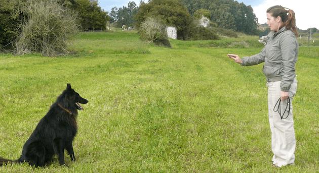 Apprenez à dressage votre chien s'il montre des tendances agressives