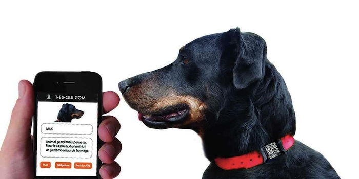 Médaille connectée GPS pour chien