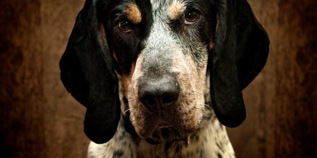 Portrait d'un chien à l'air sérieux